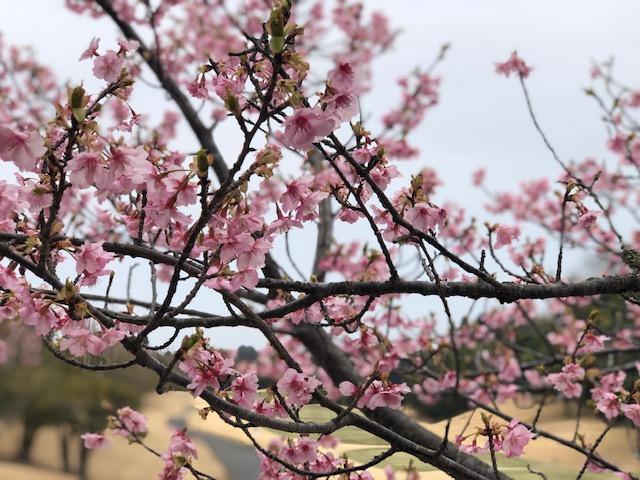 丸の内倶楽部/コースレッスン2019年3月6日
